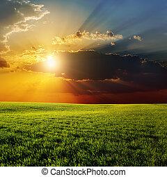 dramatique, coucher soleil, sur, agricole, champ vert