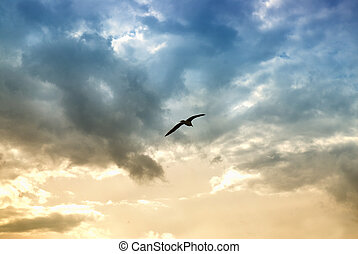 dramatique, nuages, oiseau