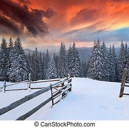 dramatique, paysage hiver, dans, les, montagnes., lever soleil coloré