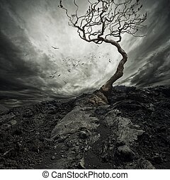 dramatisk himmel, över, gammal, ensam, träd.