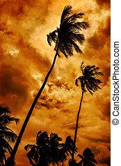 dramatisk, tropisk, sky, -, palmträdar