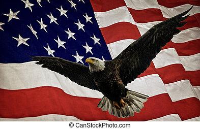 drapeau, aigle, chauve