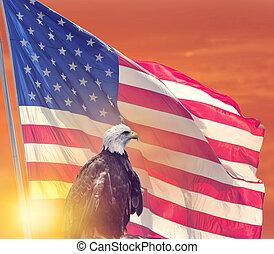 drapeau américain, aigle, chauve