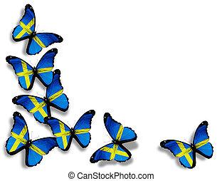 drapeau suédois, papillons, isolé, blanc, fond