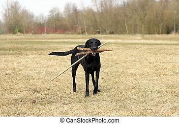 draußen, schwarzer hund