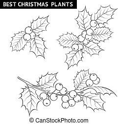drawing., 槲寄生, 聖誕節, 分支