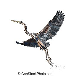 Drawing and coloring of flying Purple heron bird on white background