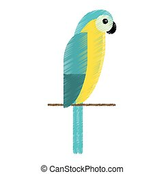 drawing blue and yellow macaw parrot brazil
