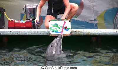 drawing dolphin