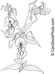 drawing field flower