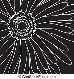 drawing gerbera - Vector illustration of white drawing...