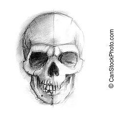 Drawing human skull. Illustration on white background