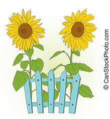 drawing., illustration, rustique, bleu, vecteur, barrière, deux, tournesols
