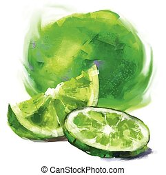 drawing lime with a slice - vector isolated lime with a ...