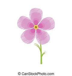 drawing magnolia flower flora ornament