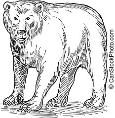 drawing of a brown bear - hand sketch drawing illustration...