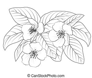 drawing of a flowering branch