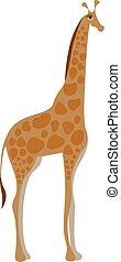 Drawing of a giraffe vector illustration