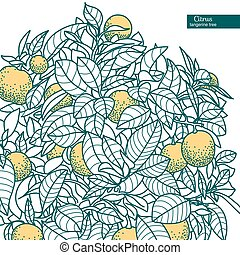 Drawing of a small citrus tangerine, orange or lemon citrus tree in a pot in contour style. Usage for ecology, nature, garden, plants, fruits.