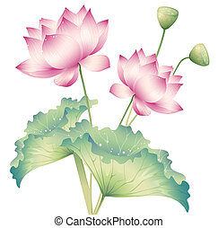 lotus - drawing of beautiful lotus in a white background