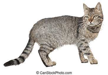 drawing of cat isolated on white