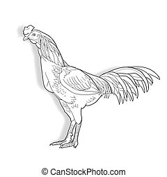 Drawing of Cock isolated on white background,vector...