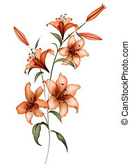 drawing of orange flower in a white background