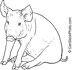 Drawing of pig on white background, vector illustration