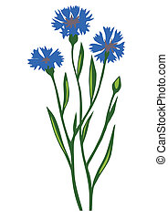 drawing of the flower cornflower on white background