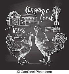 Rooster hen farm