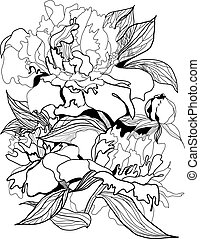 drawing peonies