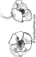 drawing poppy monochrome graphic sketch