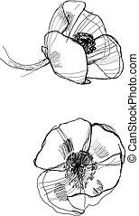 drawing poppy monochrome graphic sketch