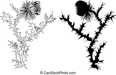 drawing thistle black and white and