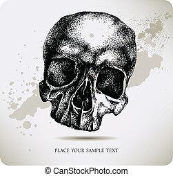 drawing., vettore, illustra, cranio, mano