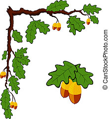 drawn oak branch with leaves and acorns, vector
