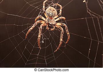 Dreadful Cross spider