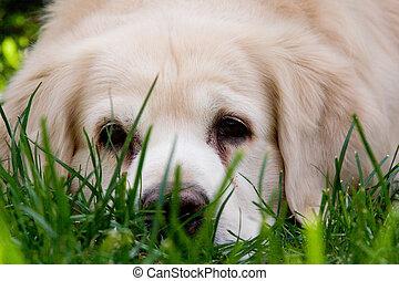 dream dog - dog