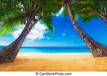 Dream scene. Beautiful palm tree over white sand beach....