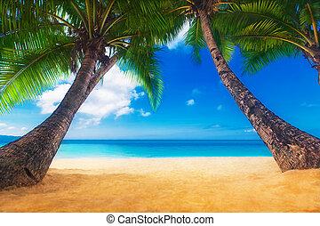 Dream scene. Beautiful palm tree over white sand beach. ...