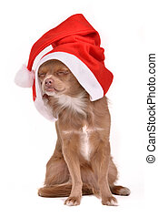 Dreaming Christmas dog wearing Santa hat