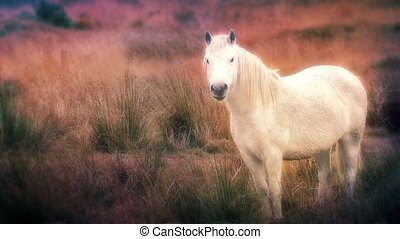 Dreamlike Vision Of White Horse - Glowing white horse in...