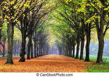 Dreamy autumn lane