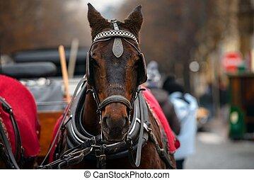 Dreamy Christmas horse