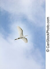 dreamy egret - Egret in flight against cloudy blue sky.