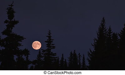 Dreamy Moonrise over Forest - Full moon rising, becomes...