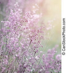 Beautiful fresh purple flowers field, abstract dreamy floral background, sun light, soft focus, spring season
