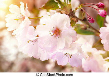 Dreamy spring blossoms