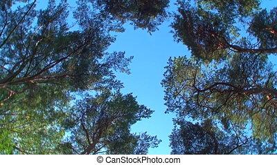 drehen, bäume