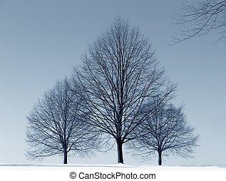 drei, bäume